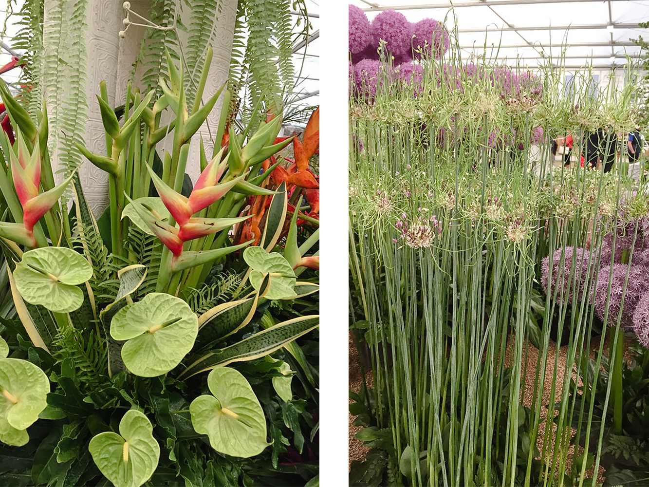 Sorrento Events team visit the Chelsea Flower Show 2017